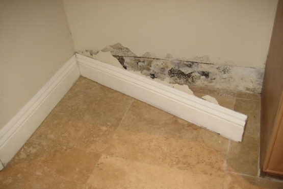 Mold Testing Articles St Petersburg Fl