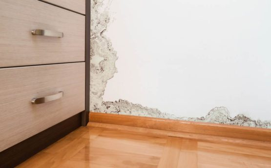 Mold testing articles st petersburg fl mold in your home expertmoldtest 555x344 solutioingenieria Image collections